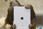Apple and Orangutan